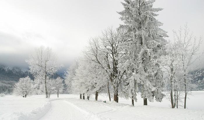 Frozen trees, Lake Bled, Slovenia.